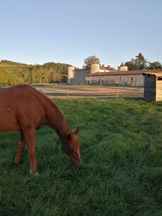 gite-equestre-fougeres-beaujolais